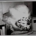 U ciuppìlle della Nonna - il tuppo