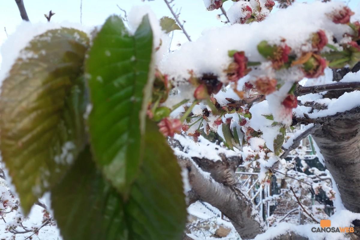 2020 Puglia Nevicata in primavera
