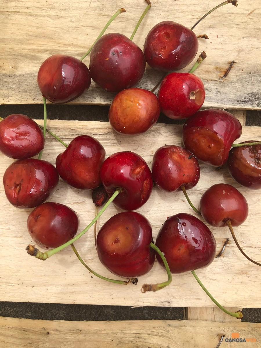 moscerini ciliegie