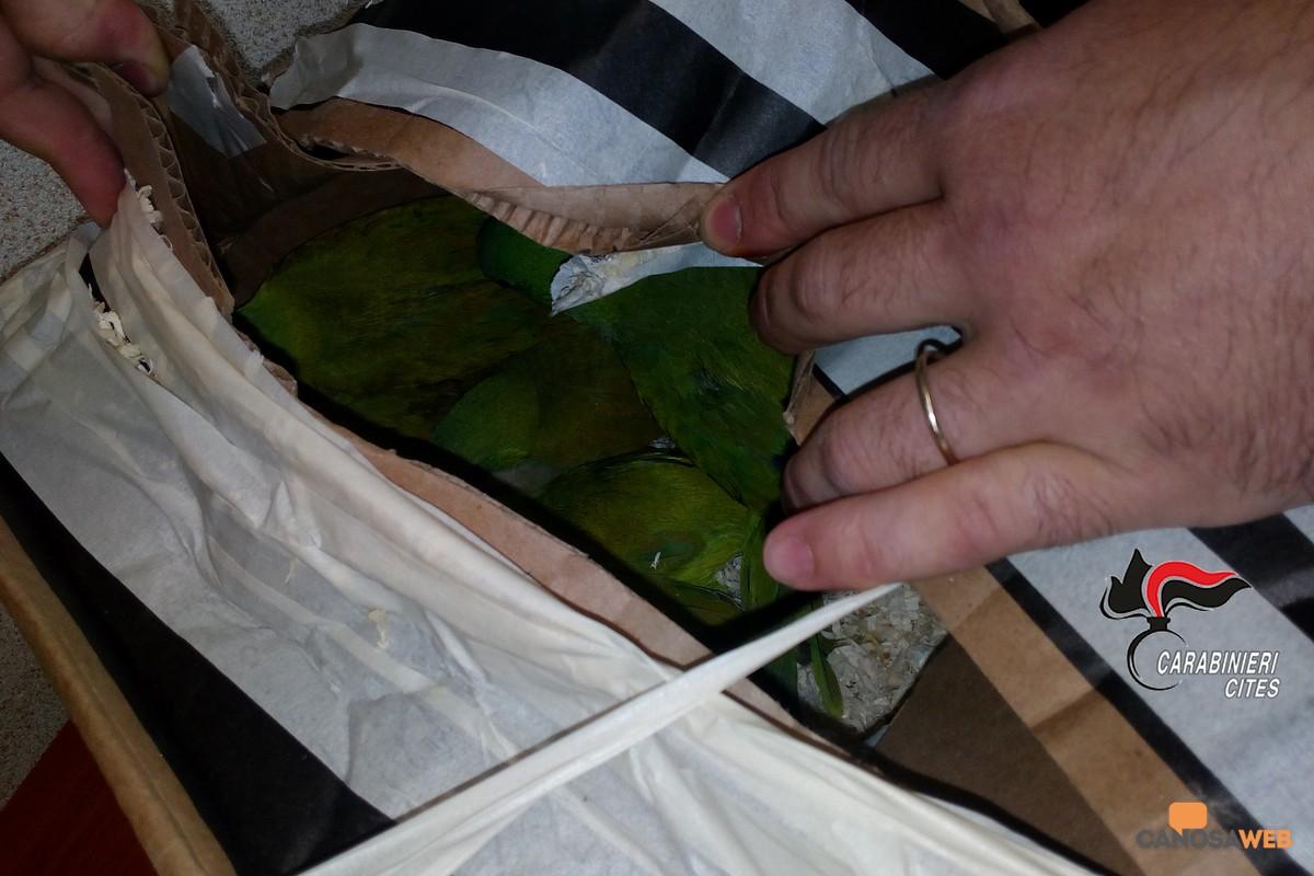 Bari :pappagalli monaci occultati