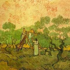 Gli ulivi di Van Gogh