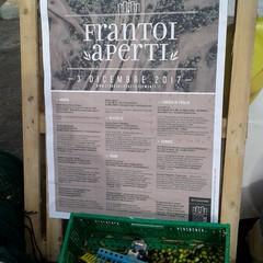 2017 Frantoi Aperti