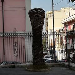 Palma colpita dal punteruolo rosso