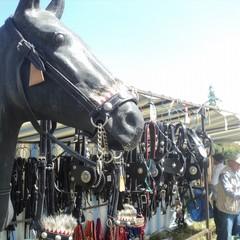 """Canosa """"La Sfilata di Attacchi d'Epoca""""  Icona del cavallo"""