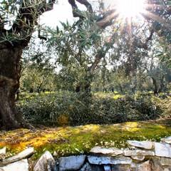 Destinazione Puglia: focus di Silvia Franzoni