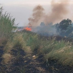 2020 Canosa Incendio sulle rive dell'Ofanto