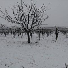Agro di Canosa di Puglia 13 febbraio 2021 ph Antonio Carbone