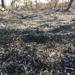 Canosa: La campagna arde
