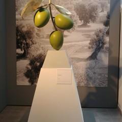 """Le """"Olive"""" di Giuseppe Carta - Museo Archeologico Nazionale di Canosa di Puglia"""