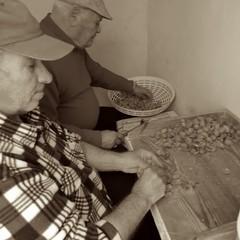 Canosa di Puglia: Preparazione mandorle per il Marzapane-Ph.Mazzarella S.