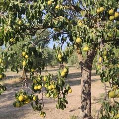 Le pere di Sant'Anna Canosa di Puglia