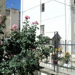 Canosa Giardino di rose