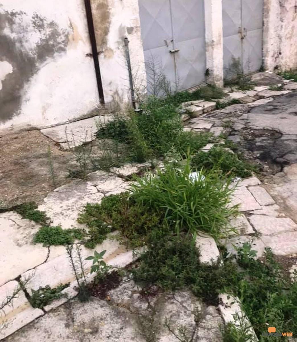 Canosa: Una giungla urbana tra erbacce e rifiuti