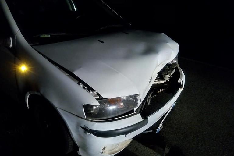 Incidente stradale provocato da cinghiale