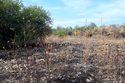 Incendi piante campagne