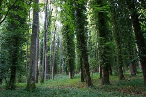 Faggi Foresta Umbra