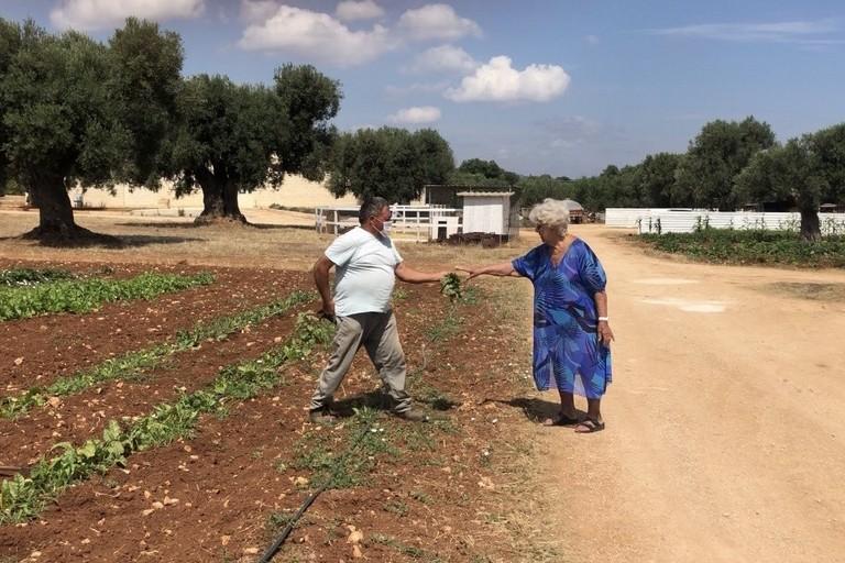 L'orto dei nonni