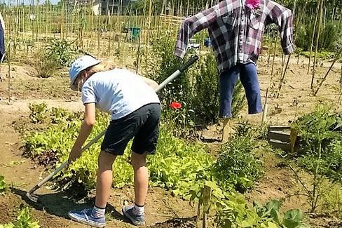 hobby farmers  zappare contadini