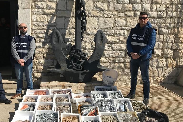 Guardia Costiera Barletta Sequestri di pesce