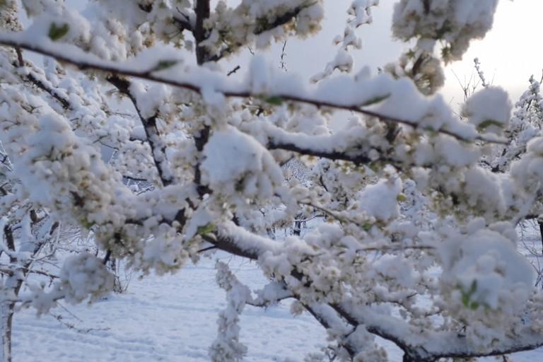 2020 Puglia Nevicata