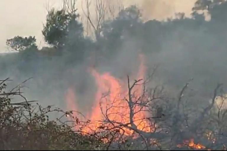 Incendio rive fiume Ofanto