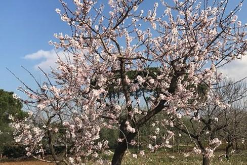 Primavera Puglia