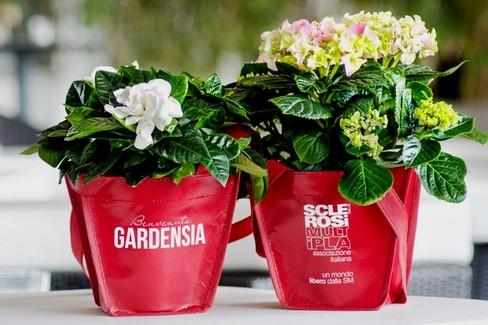AISM gardensia
