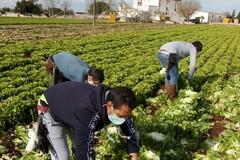 SOS raccolti con chiusura frontiere a lavoratori stagionali