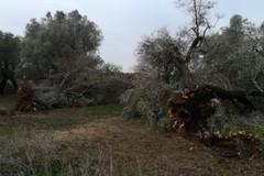 Maltempo: ingenti i danni nelle campagne