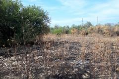 Le nostre colture non possono più bruciare