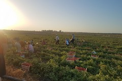 Rete lavoro agricolo di qualità: solo 8 aziende iscritte nella BAT