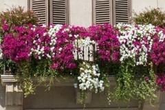 """Canosa: """"Un fiore per il BORGO"""""""