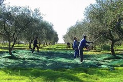 Una spinta all'agriwelfare in Puglia