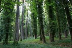 Valorizzare e tutelare il patrimonio verde e naturalistico