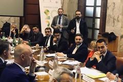 """Filiera olio: """"Tra 12 mesi frantoi chiusi e occupazione azzerata"""""""