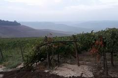 La Puglia agricola vittima di un sistema mafioso