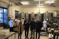 La cultura dell'olio deve crescere in Italia