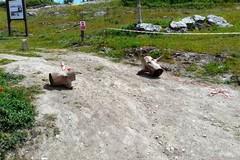 Canosa: atti di vandalismo a Pietra Caduta