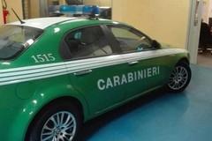 I Carabinieri sequestrano  impianto  di reti per uccellagione