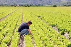 Tradito il sogno di diventare agricoltori