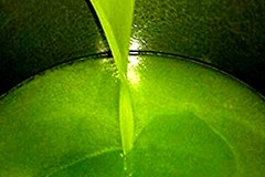 Diffondere la cultura dell'olio extravergine di oliva