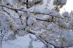 Maltempo:strage in campagna per il gelo