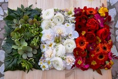 San Valentino: piante e fiori per i regali