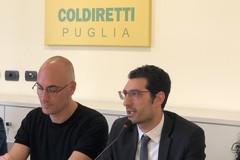 """Sale  a 25mila euro il """"De minimis"""" per le imprese agricole"""