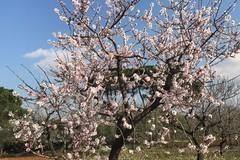 E' una finta primavera con produzioni a forte rischio