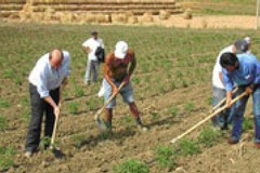 I lavoratori autonomi agricoli  devono essere ricompresi tra le attività usuranti