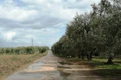 Difficoltà nella viabilità tra Andria-Canosa