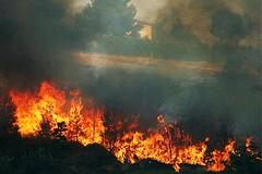 Incendi in Puglia: ingenti danni al patrimonio boschivo e all'ambiente