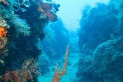 Le meraviglie della vita subacquea nei mari pugliesi