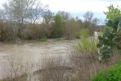 """Ofanto: """"Siamo molto preoccupati per lo stato di salute del fiume"""""""